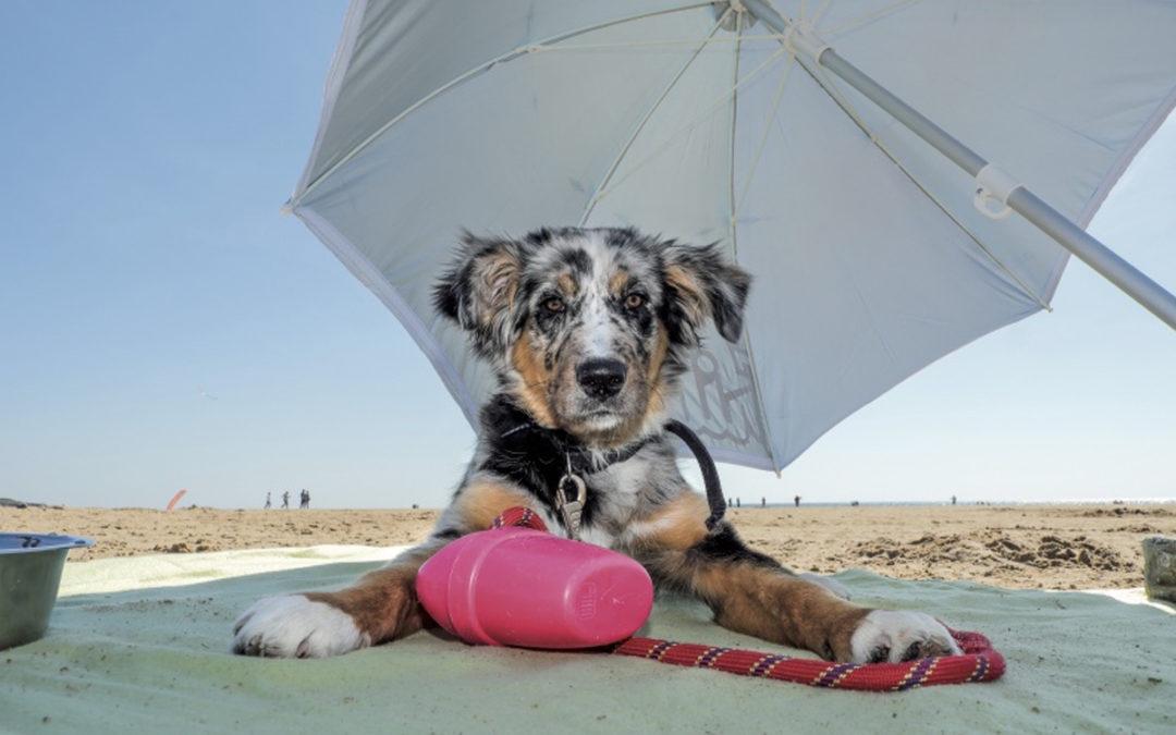 Les dangers de l'été pour les animaux !