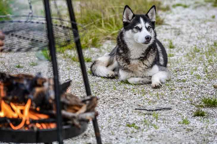 Dangers du barbecue pour le chien